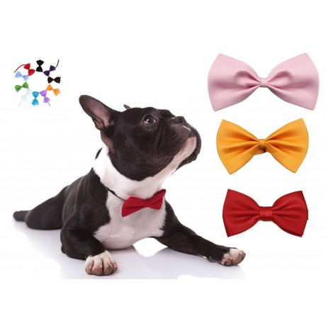 Bow tie for dog, cat
