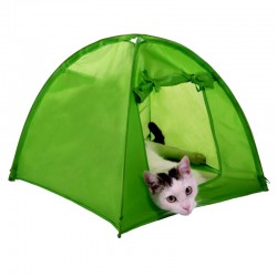 Tent, cabin, hut cat
