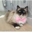 Elegancka muszka dla psa,kota