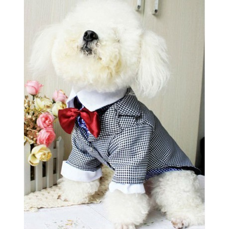 Costumes for a dog with bow tie