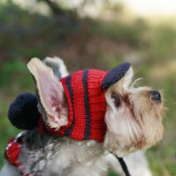 Cap with tassel for the dog