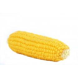 Zabawka, gryzak dla psa kukurydza