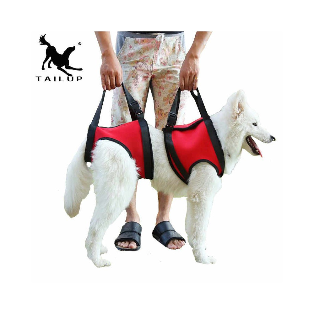 Comfortable harness with leash for your puppy - a pressure-free