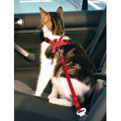 Harness for a cat - a pressure-free