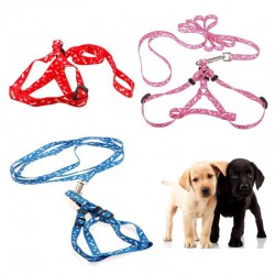 Comfortable harness for your puppy - leash